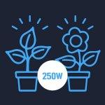 veg-flower-250