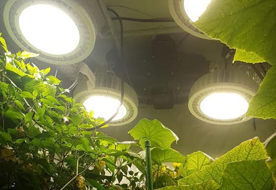 צמיחה עם מנורה