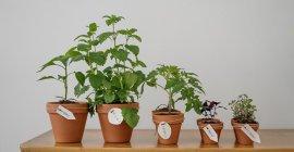 גידול-צמחים-בבית